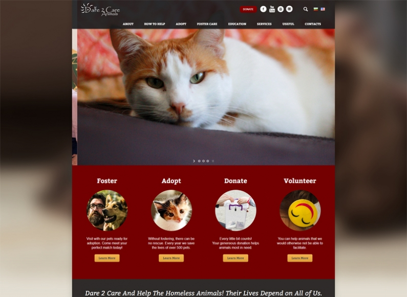 Building a new website for Dare 2 Care Animals
